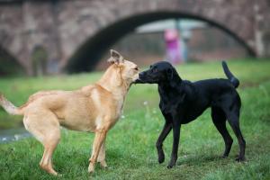 Begegnungen Hund wie Mensch © J. Fiedler