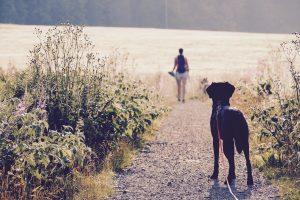 Wanderung in die Welt der Hunde