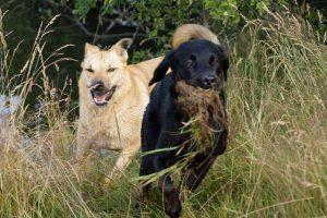 Social Walk - qualitative Zeit mit Hunden!