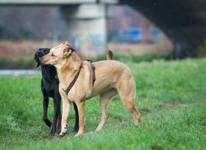 Hunde in Gemeinschaft erleben © J. Fiedler