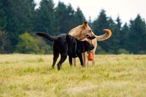 ♥ Wahrhaftige Hundeteams ♥  in Kooperation mit Franziska Theurer